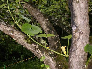 geschichte apfelbaum jahreszeiten